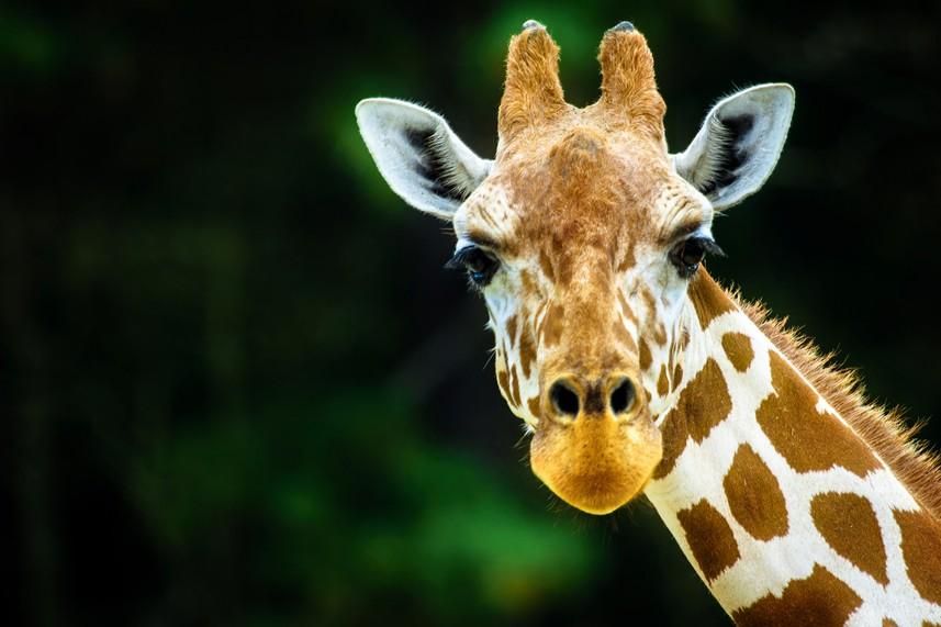 Africa Alive! Wildlife Park, Kessingland