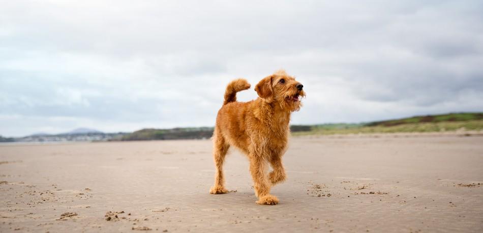 Dog Friendly at Haven
