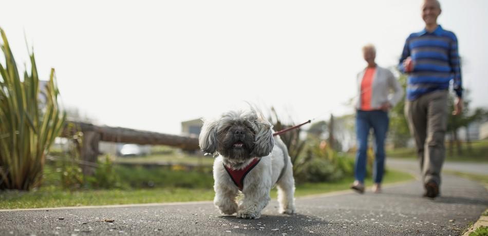 Dog Friendly Holidays in Yorkshire