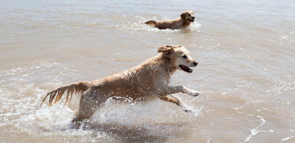 Dog Friendly Holidays in Essex