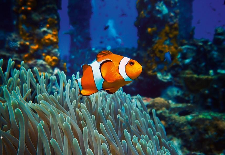 Blue Reef Aquarium, Hastings
