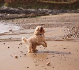 Dog Friendly Holidays in Dorset