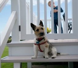 Dog Friendly Holidays in Sussex