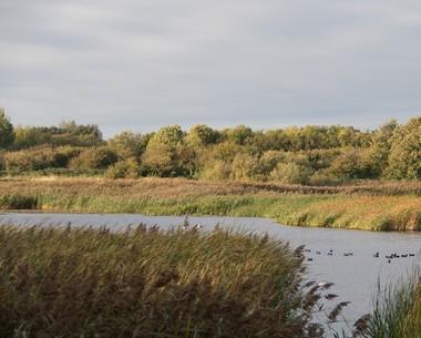 Nature reserve at Marton Mere