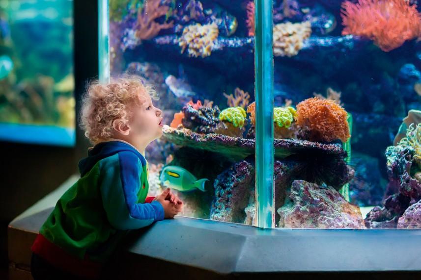 Blue Reef Aquarium, Newquay