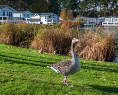 Spotting wildlife at Wild Duck